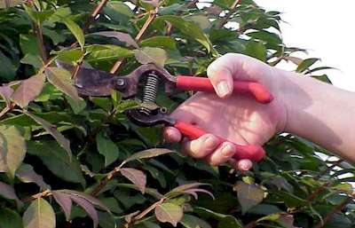 Katoomba Lawn Mowing Pruning Services
